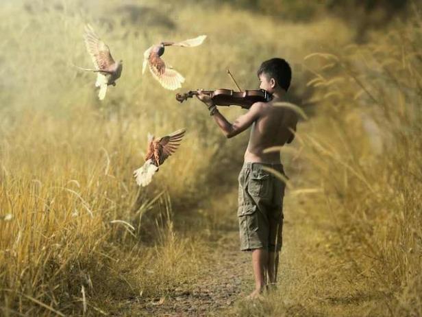 MUSICAPASSARO
