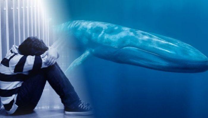 baleiaazul