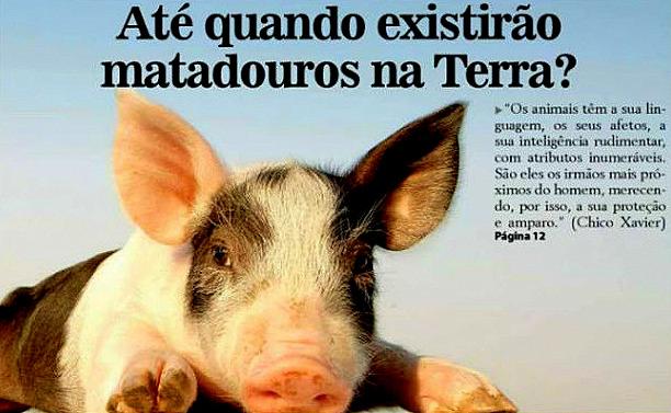 animais matadouros